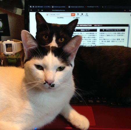 猫の前でテレワークをするときに注意したいこと3つ