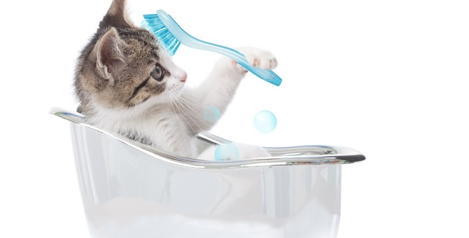 猫にシャンプーは頻繁にしてあげた方がいいの?その必要性や頻度とは