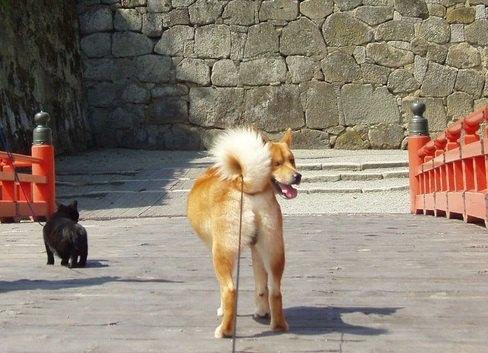 「ああ松島にゃ」猫の楽園『田代島』のパワースポットを愛犬・愛猫とお散歩