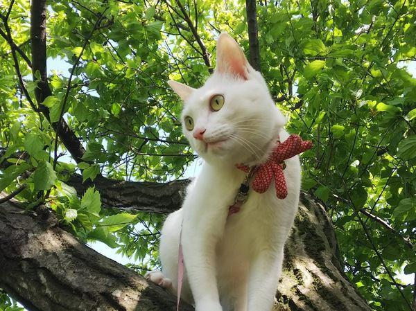 飼育環境が変化した猫への4つのフォロー