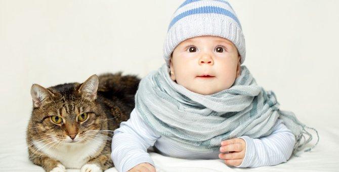 猫と赤ちゃんが仲良く暮らすための5つの方法