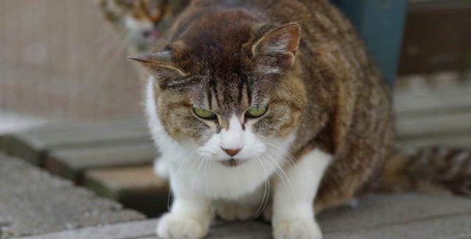 猫にとって『最悪な飼い主』の特徴3選
