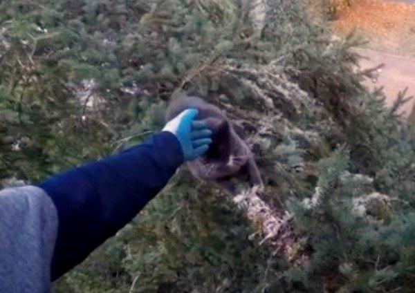 木の上で猫が猛ダッシュ!?命がけの救出劇をレポート!