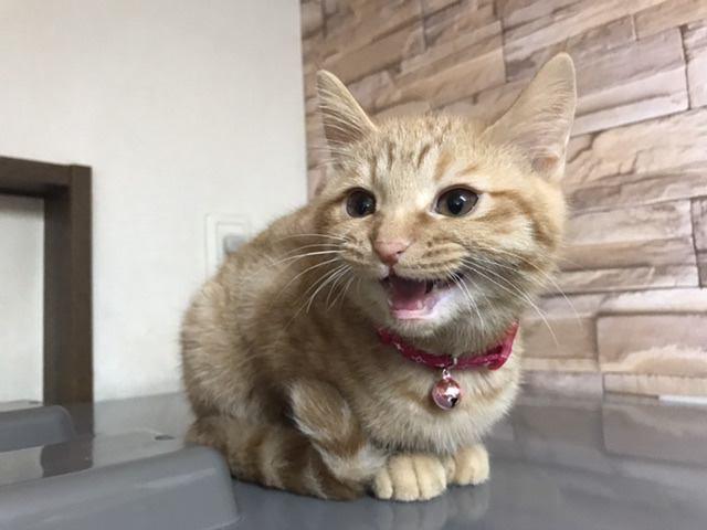 猫が「頼み事」をするときの仕草5つ