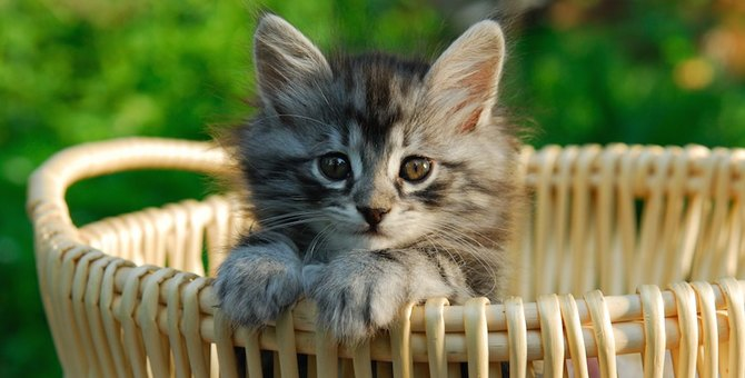 猫がバスケットの中に入っている可愛い画像10選!