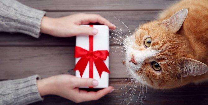 【要注意】猫の飼い主さんへのプレゼントで「一言」必要なもの5選