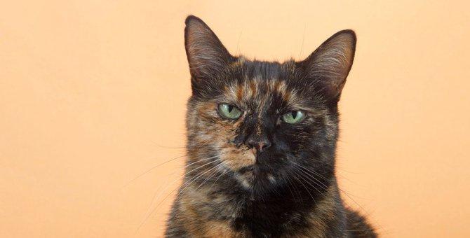 猫が『イラついているとき』に表れる仕草5つ