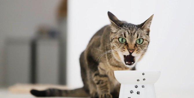 猫に与えてはいけない『NGおやつ』4選
