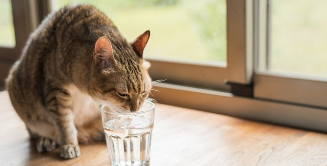 猫は暑さに強い?夏はエアコンの冷房が必要?熱中症や暑さ対策