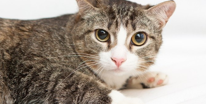 猫が『怯えているとき』に絶対しちゃダメな行為2つ!適切な対応方法とは?