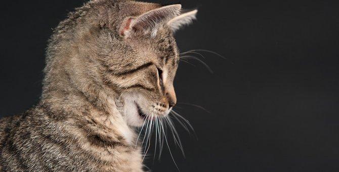 猫がストレスを感じている時の8つのサイン