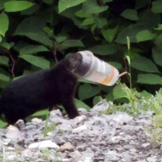 お腹が空きすぎて…プラスティックカップに頭がはまってしまった子猫