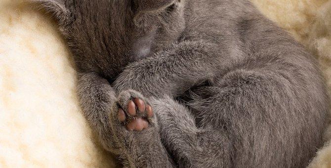 猫がうつ伏せで寝る3つの理由