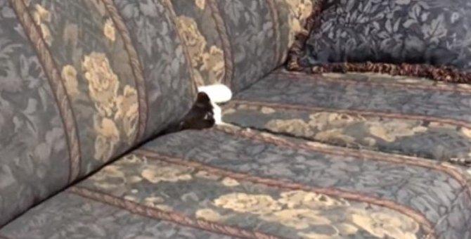 ソファの中から出てきたのは・・・。えっ?どういうこと?