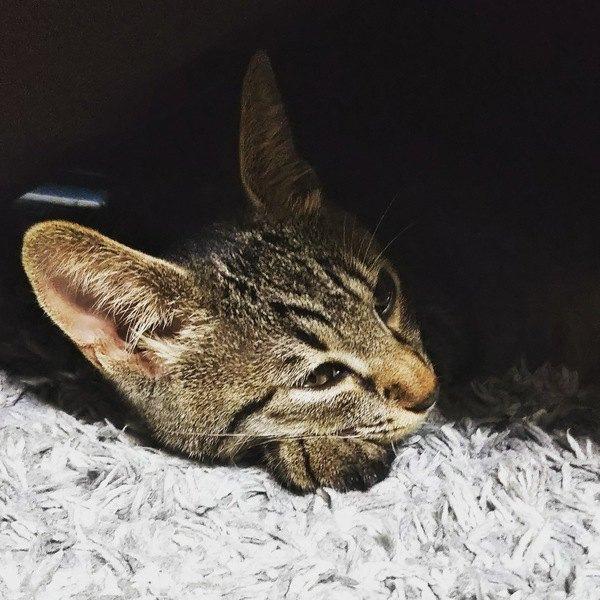 猫に寂しい思いをさせない為に飼い主がするべきこと5つ