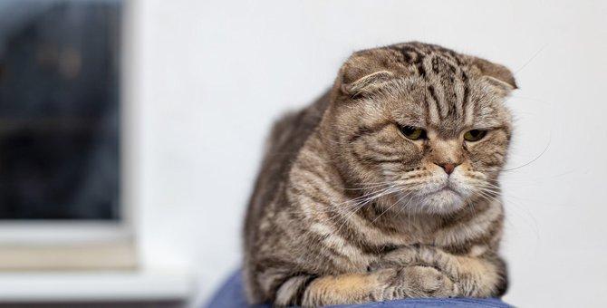 猫を白けさせる飼い主のドン引き行動4選