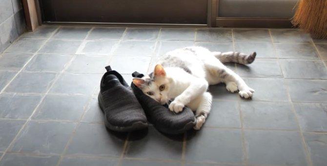 靴の気配…!猫ちゃんが真っ先に向かったその先は?