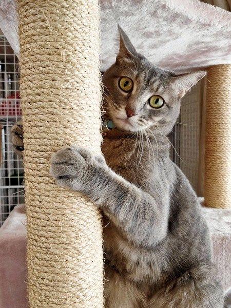 どうして?ペット可なのに『猫はNG』な賃貸物件がある理由5つ