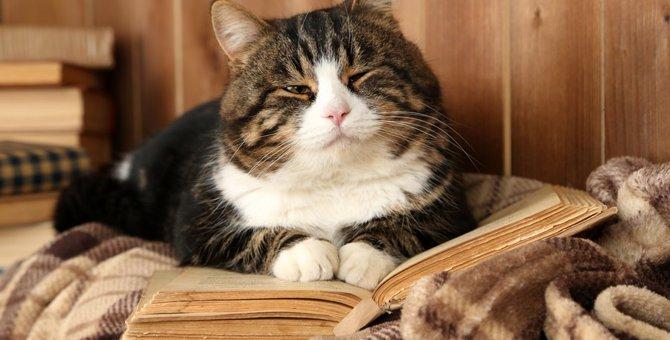 猫に関することわざや身近な言葉について