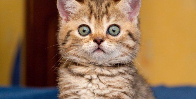 天敵はコレ!猫が『生理的に大嫌い』なもの3つ