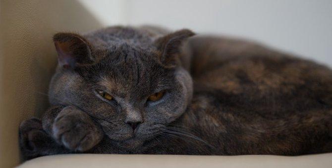 ボス猫の7つの特徴や普段の生活
