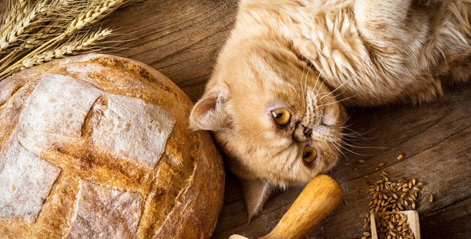 猫にパンを与えない方がいい理由とは