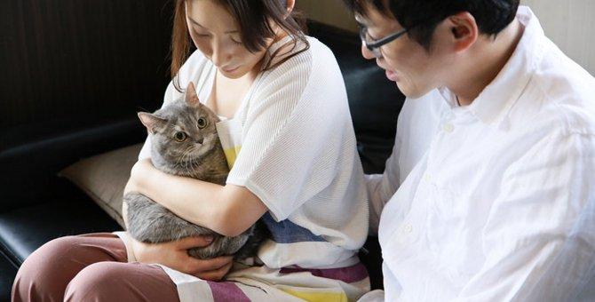 成猫から飼い始めるメリット