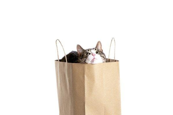 猫が紙袋に入りたがる3つの理由
