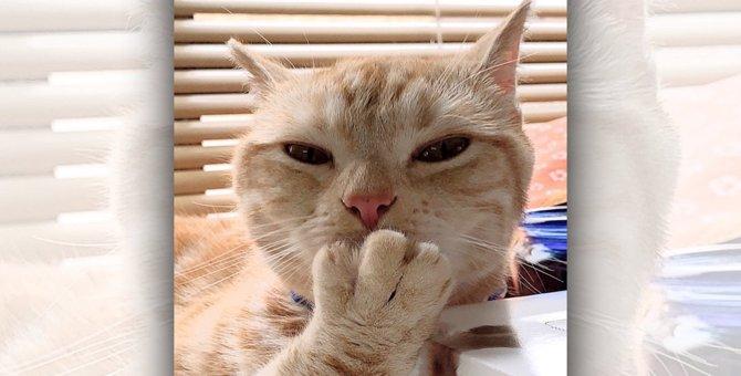 猫がいるところでアルコール消毒するときに気を付けるべきこと3つ