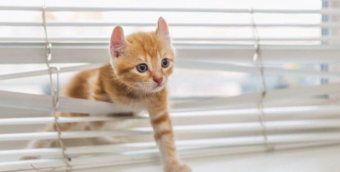 猫にとって危険な『インテリア』8つ