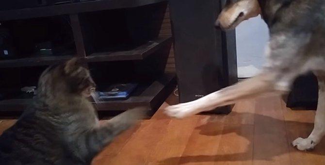 ワンちゃんからボールを守る猫ちゃん