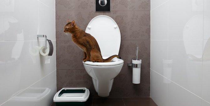愛猫も水洗トイレを使ってくれる?水洗トイレを使うデメリットとトレーニング方法