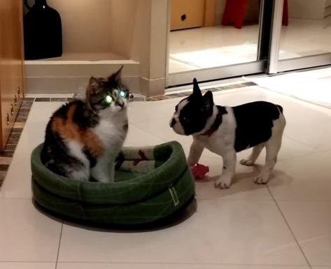 「解せぬにゃ」犬に居場所を追われた猫