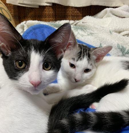 愛情を受けて育った猫の特徴3つ