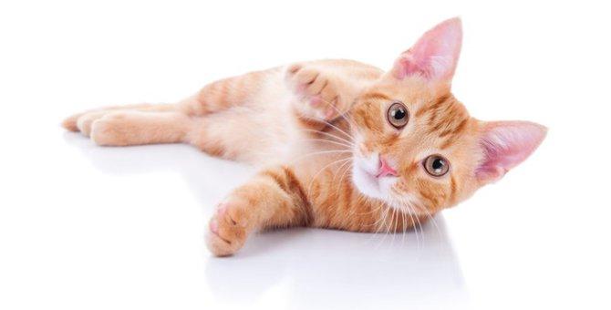 猫に油揚げを食べさせる際の与え方とは