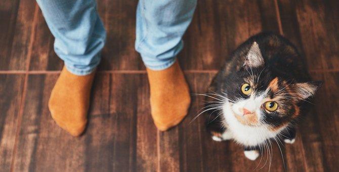 猫が飼い主の足を踏む3つの理由