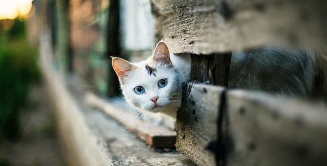 今すぐ改善!猫が家出してしまう住宅環境5つ