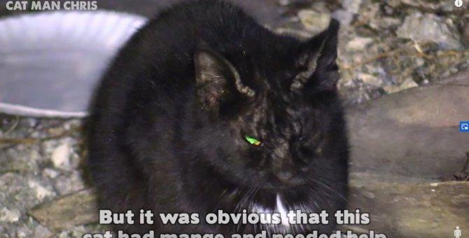 ひどい疥癬で目を開けるのもやっとだった野良猫。驚きの大変身で美猫に!