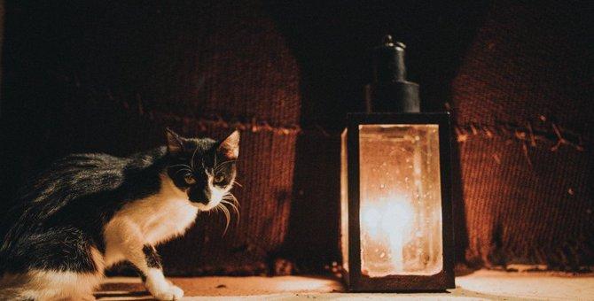 猫がする「不気味な行動」とその意味5つ