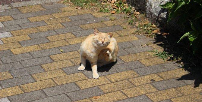 猫も水虫になる可能性がある!その原因と対処法