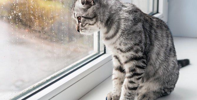 台風の脅威に要注意!猫の病気との関係性とは
