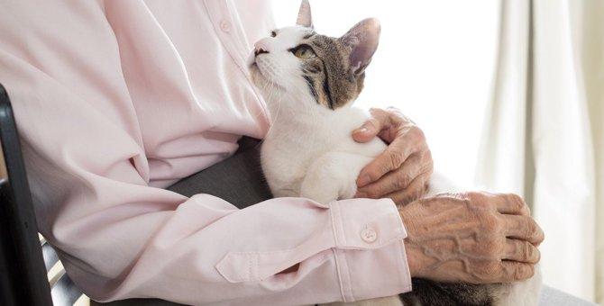 猫の短命に繋がる『不治の病』3つと予防法
