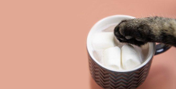 猫の『イタズラ・噛み癖』をなおす方法5つ
