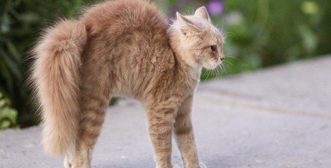 猫に『懐いてもらえない人』のパターン3つ
