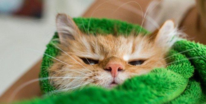 猫のしつけは性質を利用して成功率を上げよう