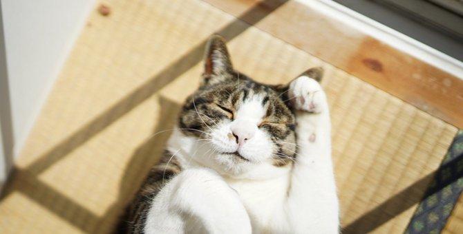 猫のお留守番中の事故を防ぐためにできる工夫7つ