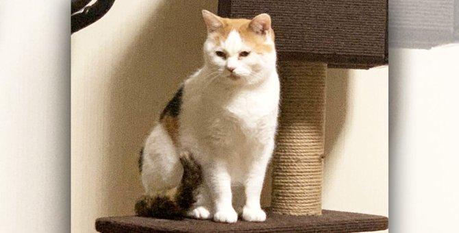 人間嫌いの元野良猫が1年かけてやっとゴロゴロ…きっかけの大事件とは