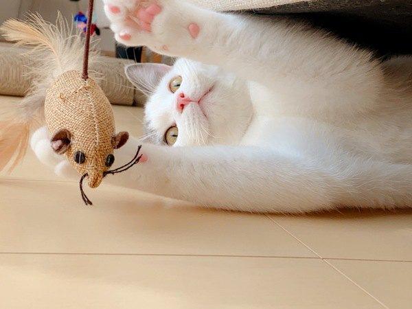 猫が家の中の物に猫パンチしているときの心理3つ