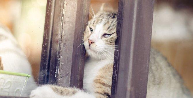 猫の『脱走防止』対策5つ!おすすめのグッズとは?