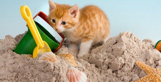 猫のトイレとして代用できるおすすめ商品3選!砂やスコップの代用品も紹介